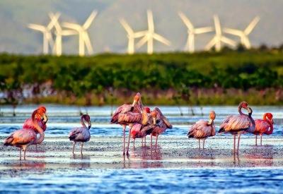 Bahia De Las Aguilas