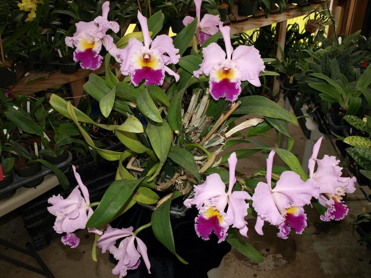 Orchids, Orchids, Orchids