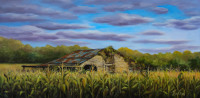 Overgrown in the Corn Field oil painting done by North Carolina Artist Tonia Gebhart, The Barefoot Artist. It's an oil painting of a corn feild, barn and early morning clouds.