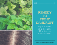 Oregano leaves, nettle leaves and scalp with dandruff