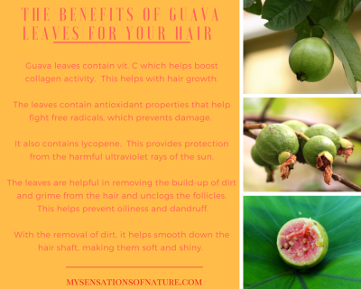natural remedies for hair, guava for hair, nature's secrets, alternative remedies