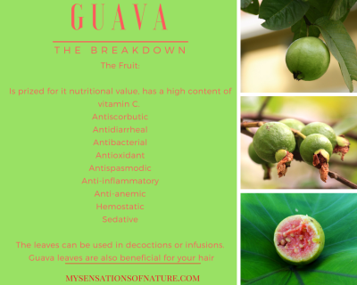 natural medicine, guava, benefits of guava, natural pharmacy, nature's gifts