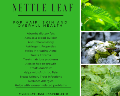 nettle leaf, benefits on hair, benefits of nettle leaf for skin, overall health benefits of nettle leaf