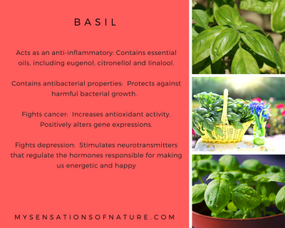 health benefits of basil, natural remedies, basil, health