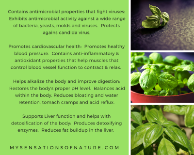 Basil Health benefits
