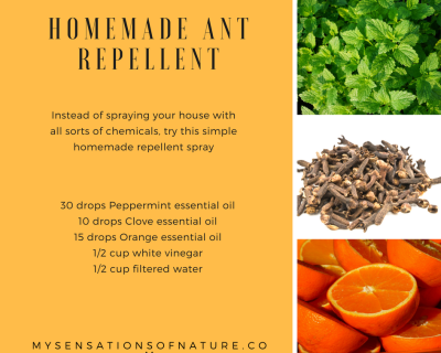 ant repellent, natural repellent, essential oils, homemade, chemical free, remedies
