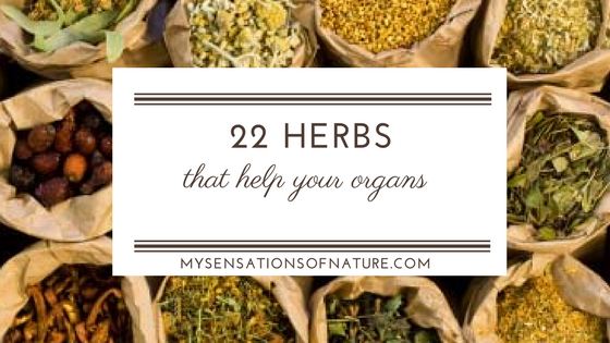 22 Herbs that help your organs