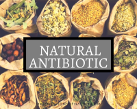 natural antibiotic, nature's gifts, natural medicinal cabinet, natural alternatives, garlic, manuka honey, ginger