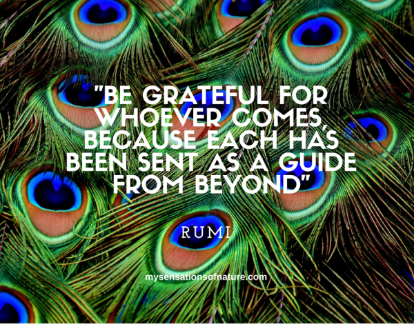 Rumi, life quotes, life lessons, reflect, ponder, live life, quotes to live by