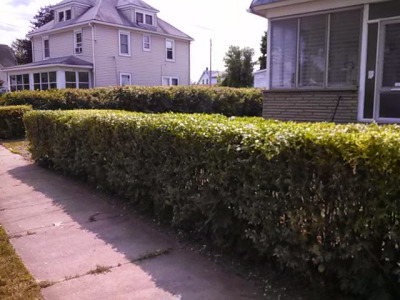 Hedges after