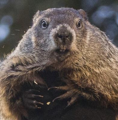 Groundhog Day and HAM Radio - Why it matters