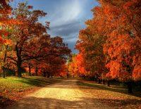 Fall/Winter 2016