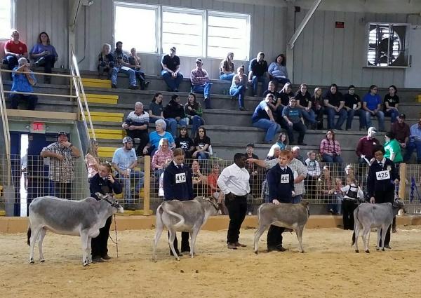 Heifer Class Champions