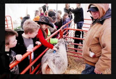 Zebu are a big hit at Hayes Elementary