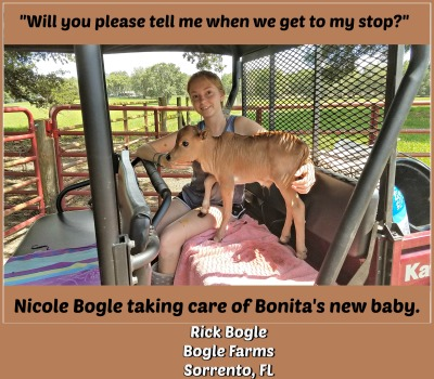 Pedicures at Bogle Farms
