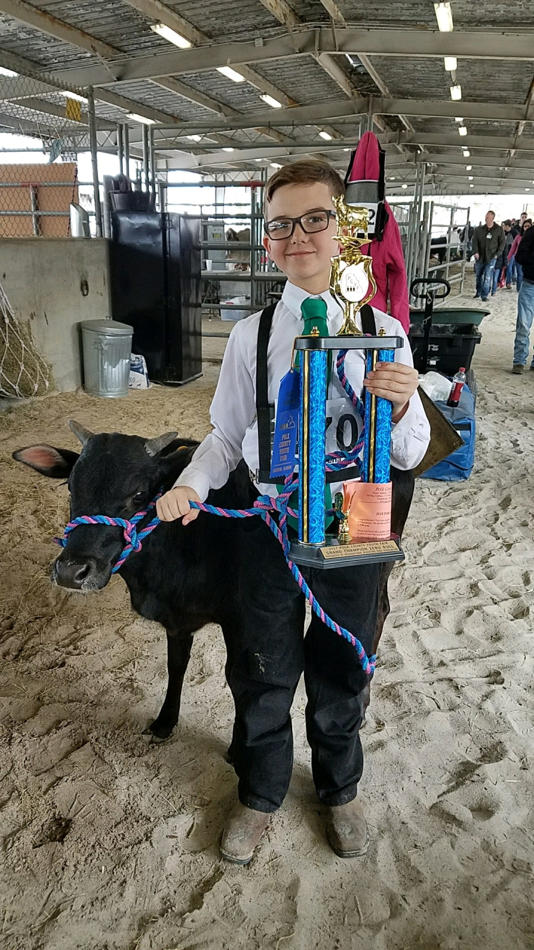 Grand Champion Male Miniature Zebu