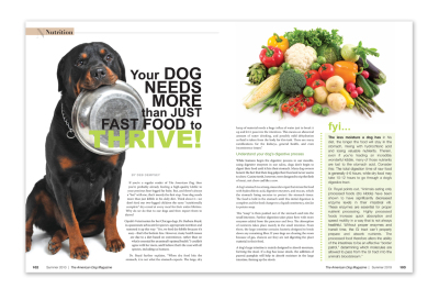 magazine layout, pet magazine, dog magazine, dog and cat magazine