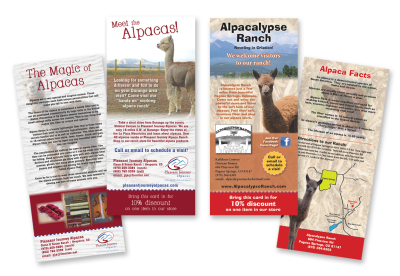 Rack card design, alpaca rack cards, branding, rack cards