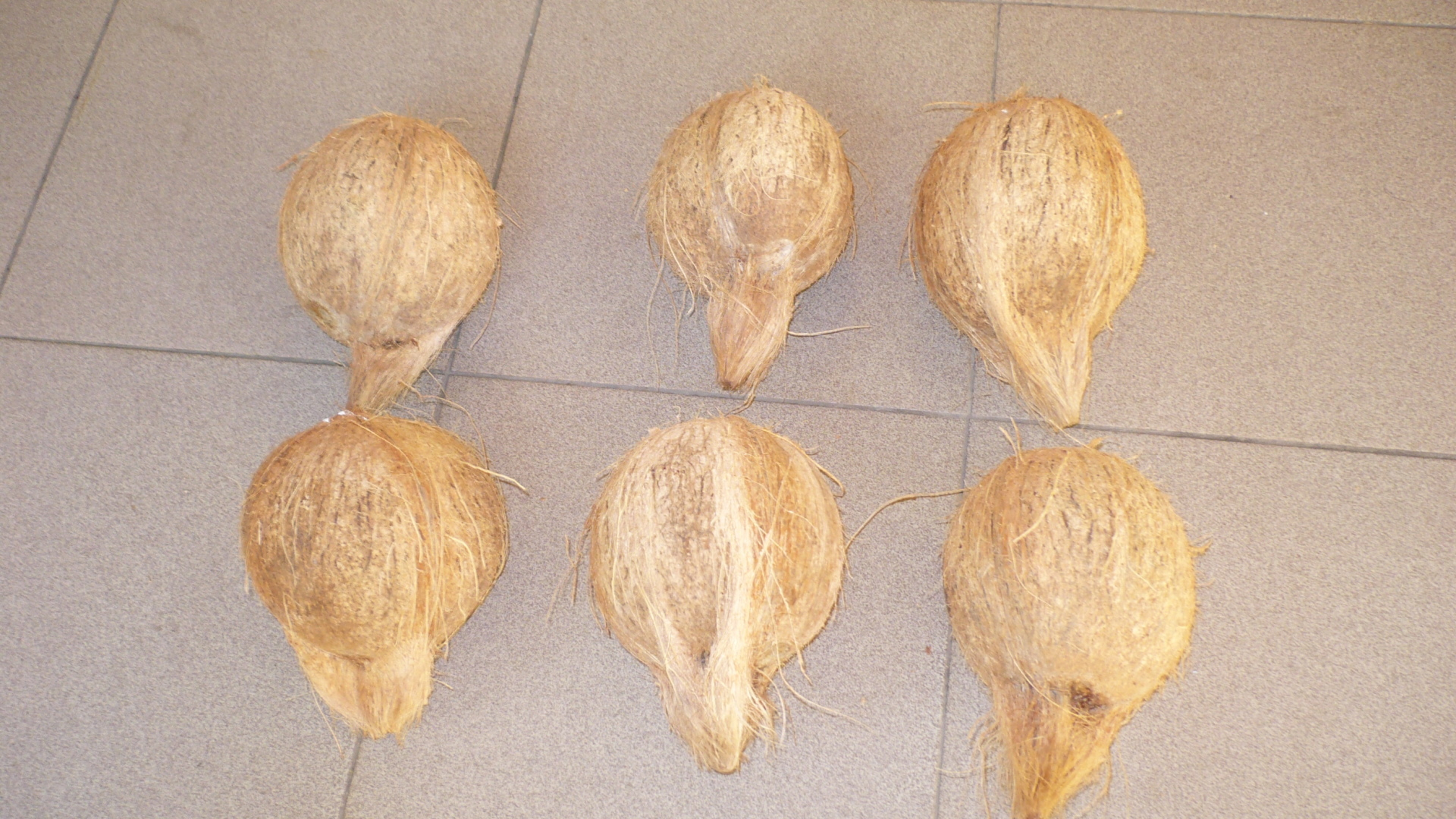 Coconut For Exports