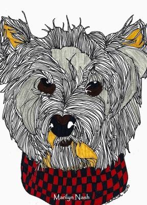 Marilyn Nash Drawing Westie Dog