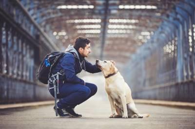 HELP COMPANION ANIMALS