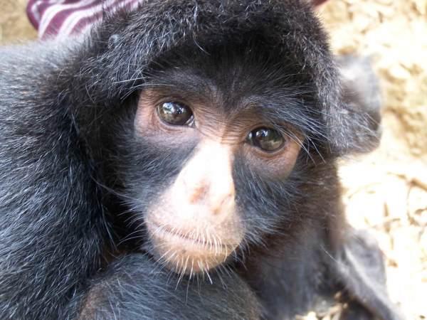 Adopt A Spider Monkey