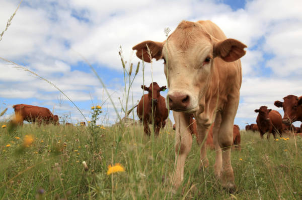 Animal Agriculture Damaging Environment