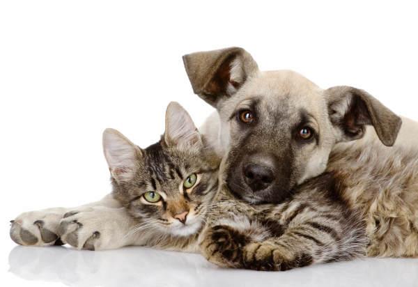 Preventing Animal Poisonings