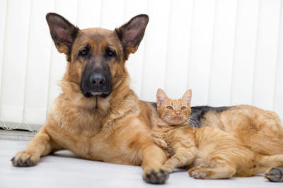 Legal Protections For Animals