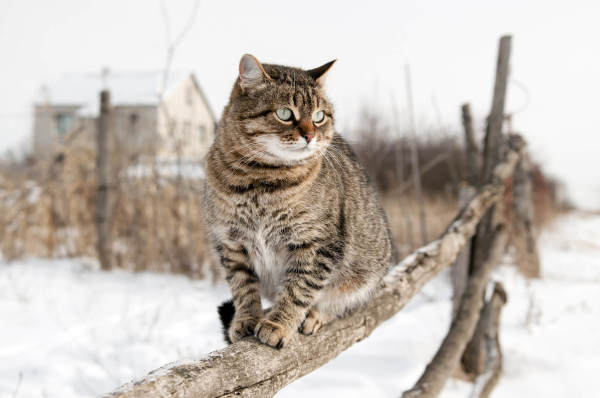 Protecting Outdoor Cats In Winter