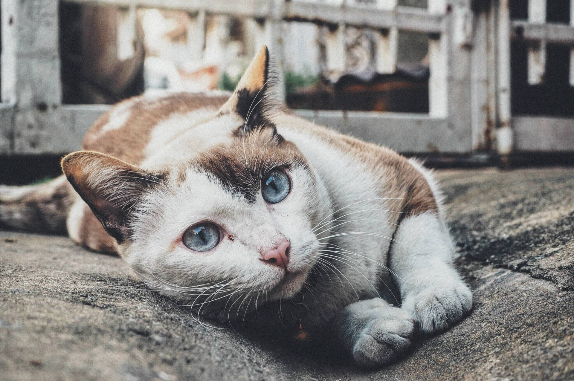 Trap-Neuter-Return Feral Cats