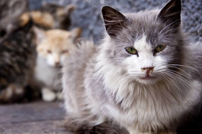 The Truth About Feral Cats