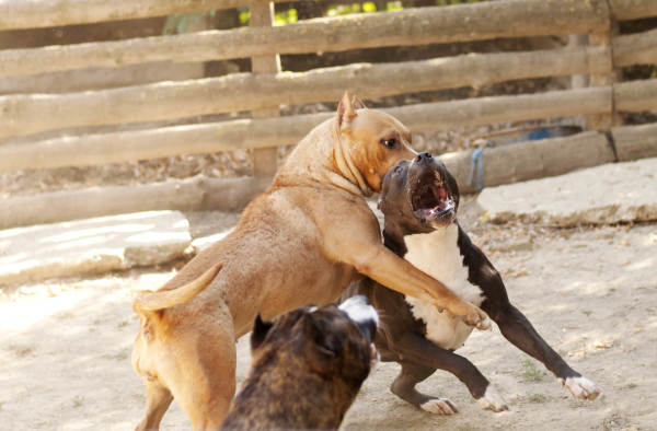 Stop Dog Fighting