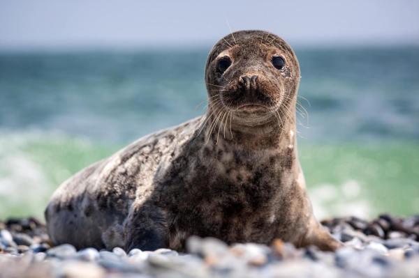 Seals & Sea Lions Under Siege