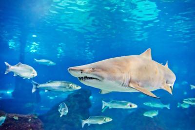 Help Save Sharks