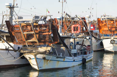 Commercial Fishing Causing Collapse