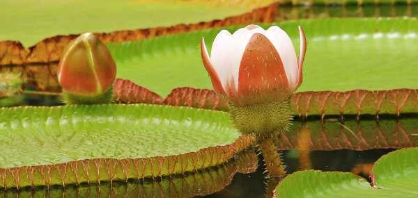 Conserving Wetlands