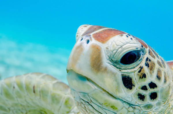 Sea Turtles Face Plastic Deluge Danger