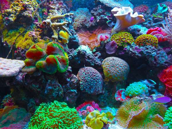 Coral Reefs In Crisis