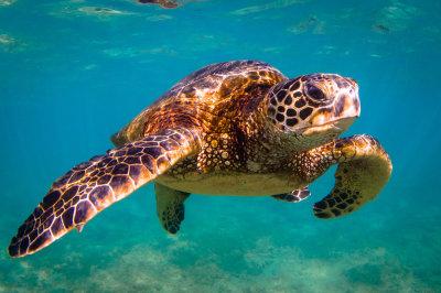 Save Sea Turtles