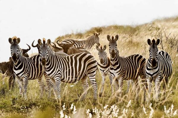 How You Can Help Conserve Wildlife