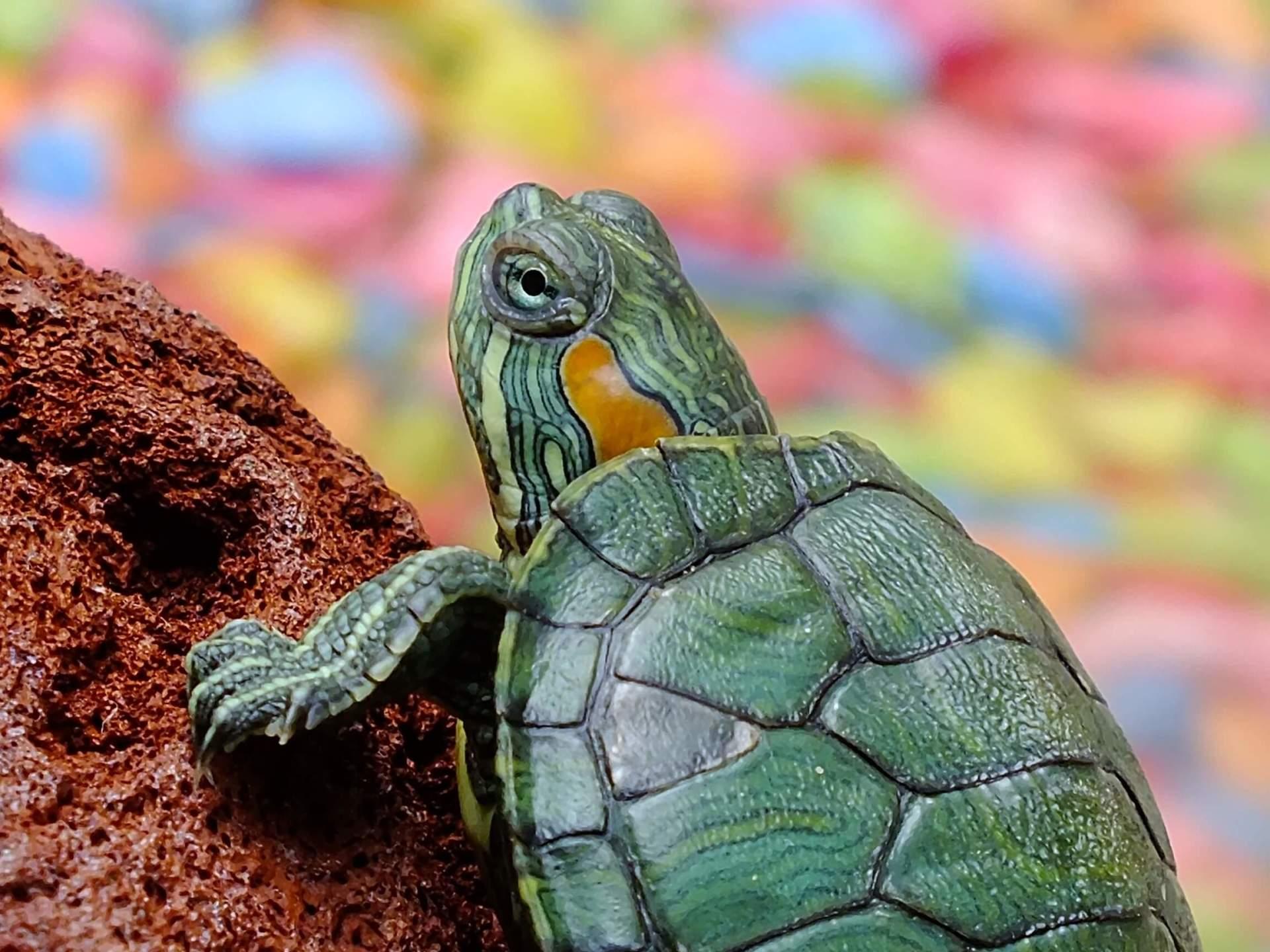 Help Turtles & Tortoises