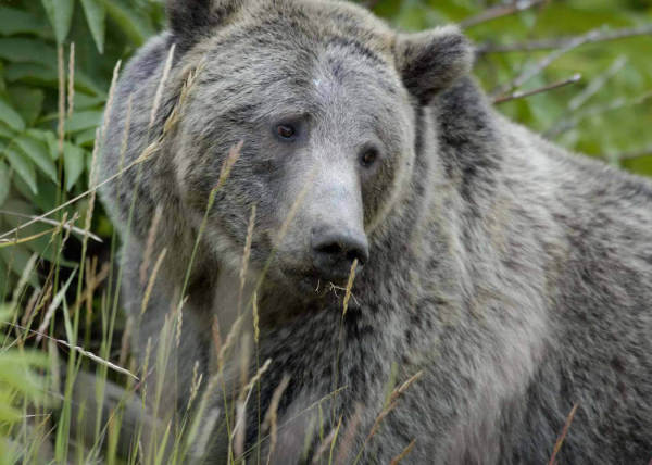 Help Save Bears