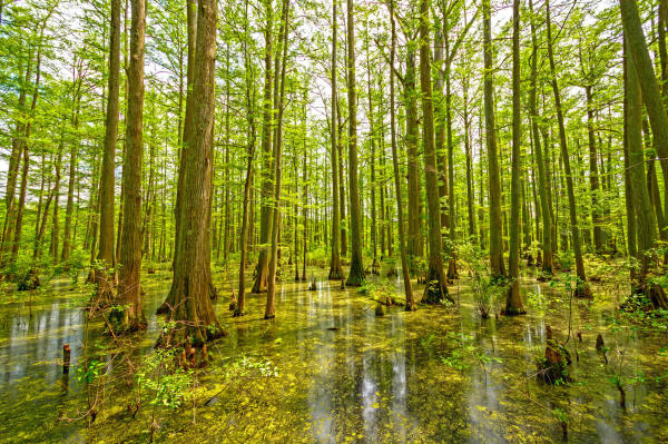 10 Interesting Things About Ecosystems