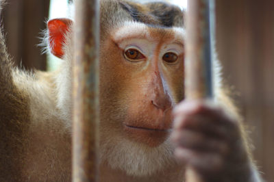 Help Stop Product Testing On Animals