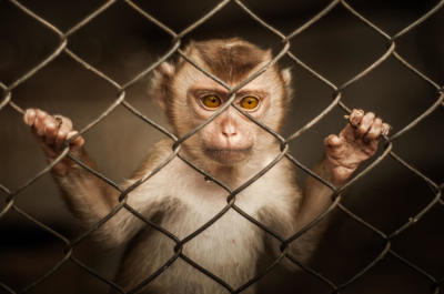Stop Drug Testing On Animals