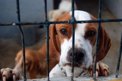 Tell The Military To Stop Testing On Animals