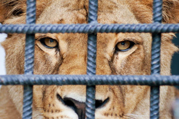 What You Should Know About Circuses