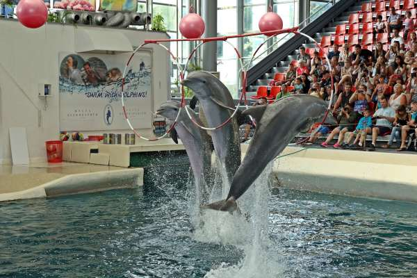 Myths About Orcas & Dolphins In Captivity