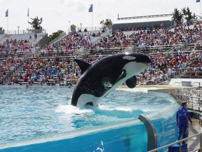 Don't Support Marine Mammal Parks